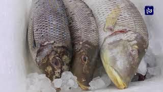 الأسماك طبق أساسي على موائد رمضان في العقبة - (2-6-2018)