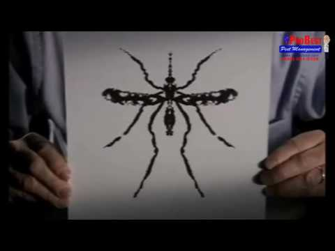 Diseases transmitted by Household Pest - Pest Control in Gilbert , Arizona