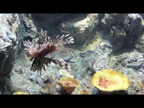 ю Подводные обитатели Андаманского моря