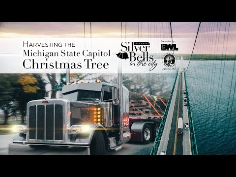 Harvesting the Michigan State Capitol Christmas Tree for Silver Bells in the City 2016