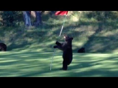 Pole Dancing Bear - Funny Musical Version