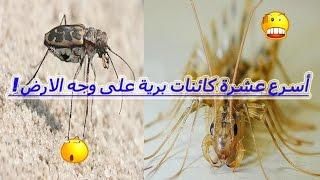 أسرع 10 كائنات برية على وجه الأرض !