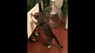 Кошка закапывает добычу