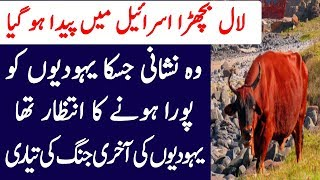 Haikal E Sulemani Ki Tameer Aur Lal Bachra  L Melight Studio