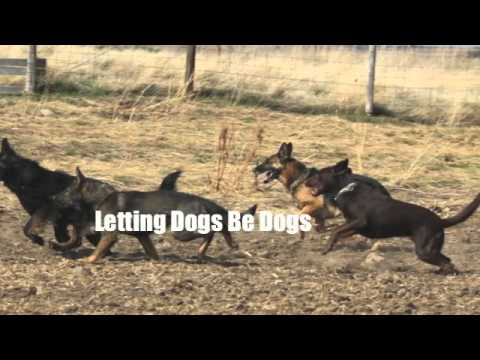 Absolutely Stirling Dog Training