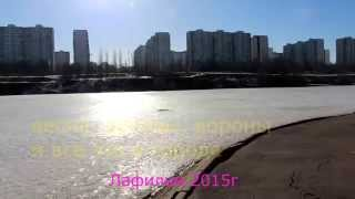 Поведение ворон. Весна, дрозды вороны в городе. Птицы в Москве