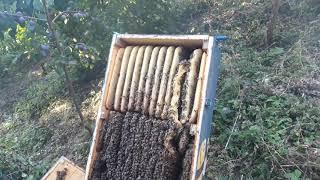 Bienenkiste. Honigernte Teil 1