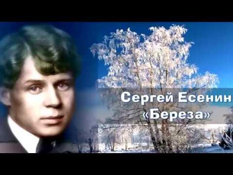 Изображение предпросмотра прочтения – СерафимаСедова читает произведение «Берёза» С.А.Есенина