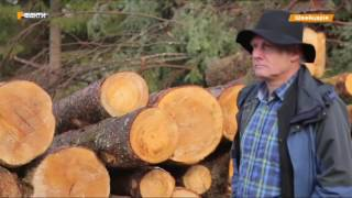 Не рубают без разрешения и только раз в 10 лет. Как Швейцария бережет лес
