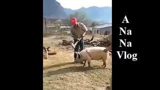 Hai Dong vat A Na Na Vlog