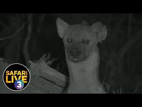 safariLIVE on SABC 3 - Episode 4