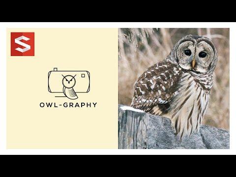 illustrator tutorial Owl-Graphy Logo Design | Sopheap Design thumbnail