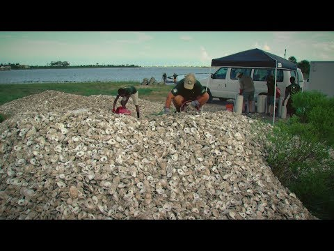 PBS SHOW Oyster Shell Recycling, Bighorn Sheep, Looking for Bees, #2713