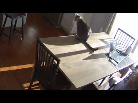my cat like knocking things off the table