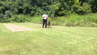 Sgt. Glen Harris with Breston - Rockingham (NC) Police Department