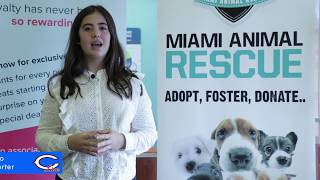 Miami Animal Rescue Fostering Program