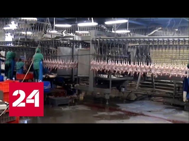 Осужденные работают на красноярской птицефабрике - Россия 24