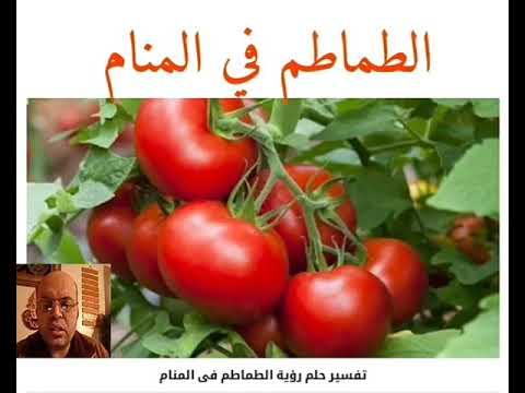 تفسير حلم الطماطم في المنام لابن سيرين قناة تفسير الاحلام محمود أحمد منصور Youtube