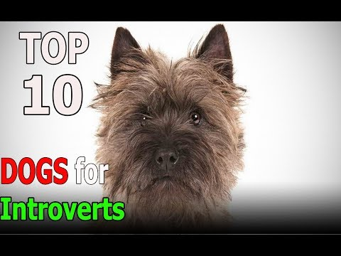 Top 10 Best Dog Breeds for Introverts | Top 10 animals
