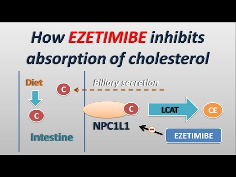 how-ezetimibe-controls-absorption-of-cholesterol