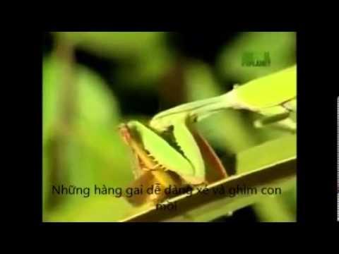 Tập tính của bọ ngựa