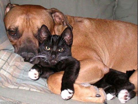 Милые, смешные, кошки, собаки,домашние животные