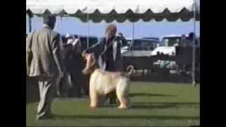 1995 Ahca National Specialty (2/6) - Dog Classes