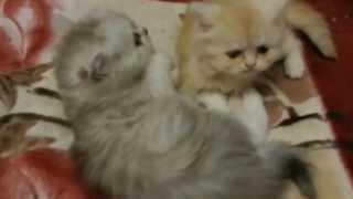 Мои котятки