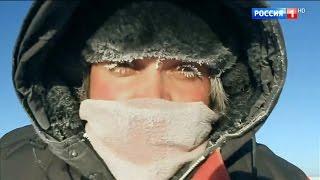 видео Жизнь в Арктике