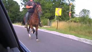 Repeat youtube video GT'S HOMEBOY SPEED RACKING STALLION