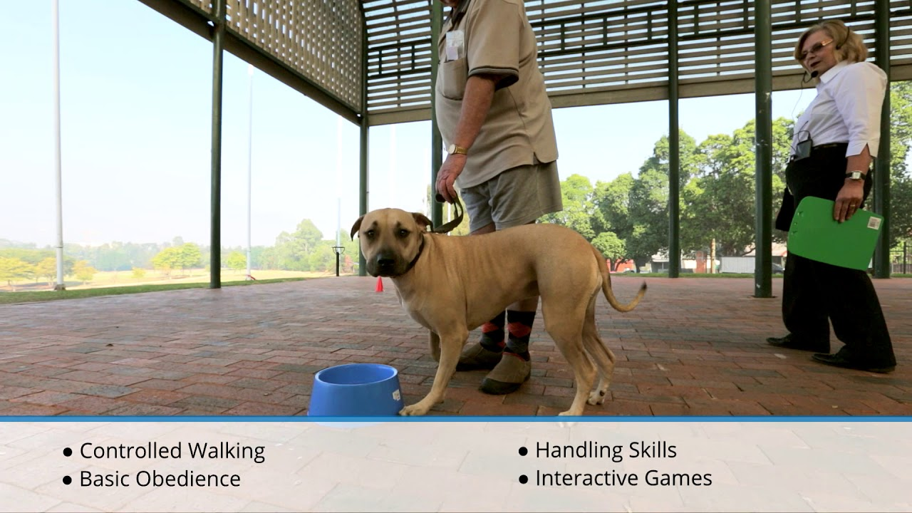 Dog Behaviour Specialist | Puppy Obedience Training | Home Group Classes