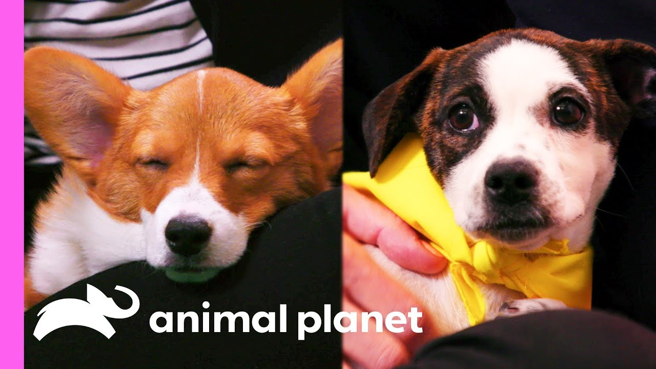 Meet The Puppies Of The Puppy Bowl Youtube