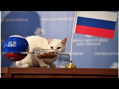 Kahin kedi Aşil'den Rusya-Mısır maçı tahmini