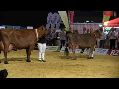 CATTLE.de: German Dairy Show 2019 Nr. 60