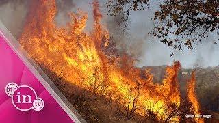 Waldbrände in Kalifornien: Miley Cyrus und Co. sind betroffen!