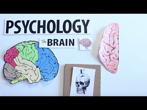 AP Psychology- The Human Brain - YouTube