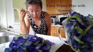 indigo blue - Blue Butterfly