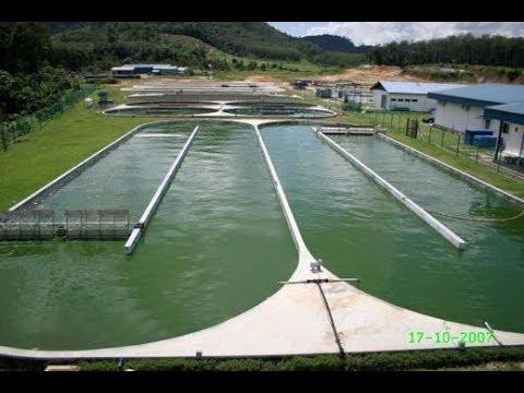 DXN Spirulina Farm in Malaysia 360p