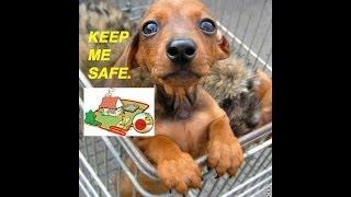Electric Dog Fence Pet Barrier