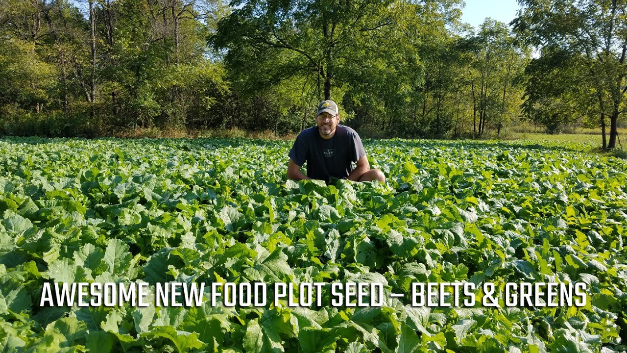 Awesome New Food Plot Seed Beets And Greens Youtube