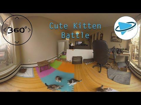 360° Cute Kittens Battle in  Video