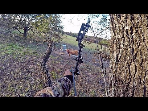 This Longhorn Ruined My Hunt