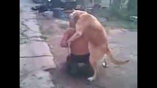 Пёс по кличке Бобик ебёт алкаша
