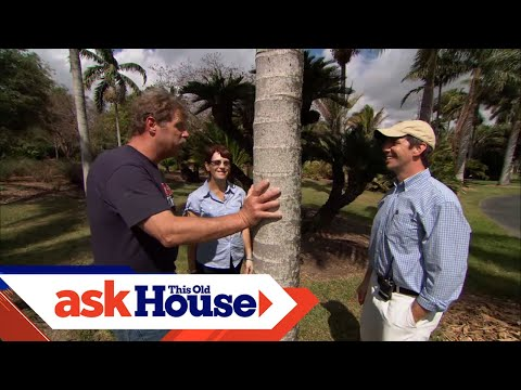 How to Plant Palm Trees