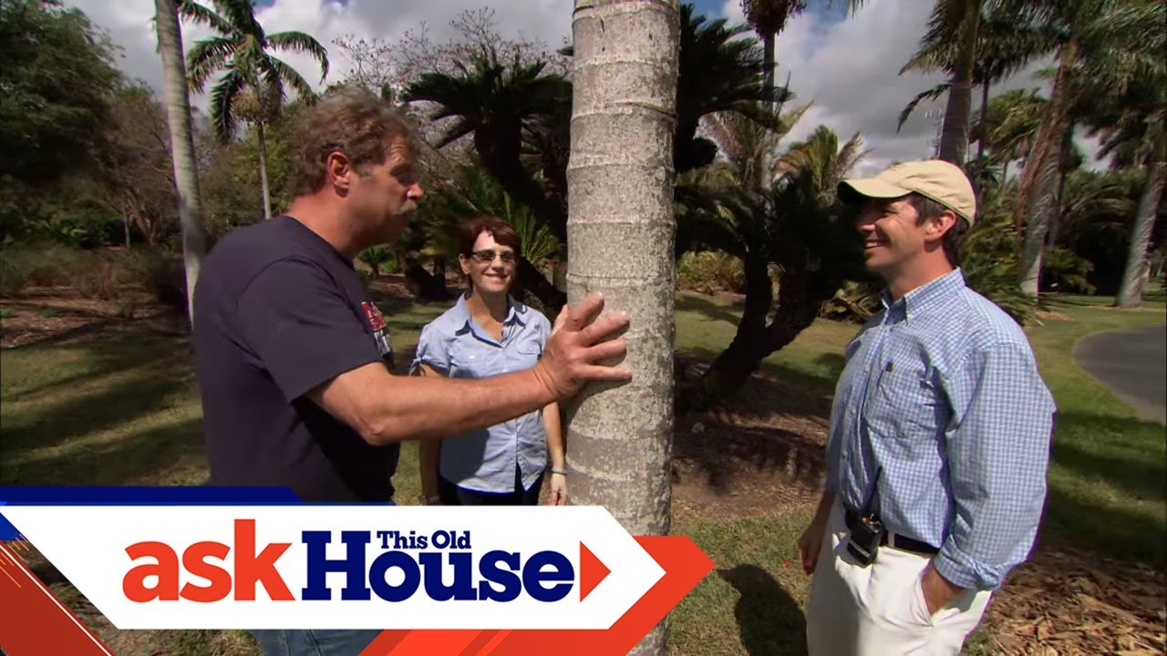 How To Plant Palm Trees Ask This Old House