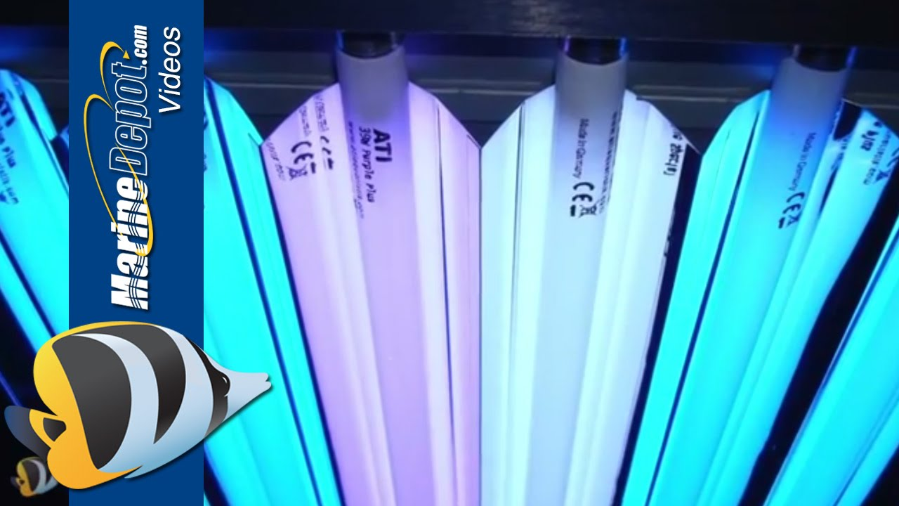 T5ho Fluorescent Proven Lighting For Your Reef Aquarium Youtube