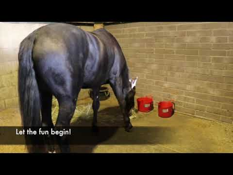 Feeding cafeteria-style: why your horse will thank you | Your Horse