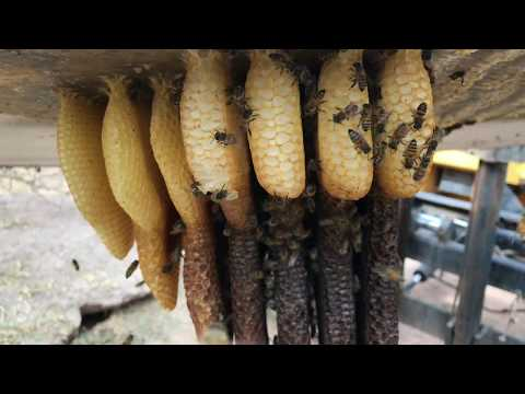 Boom Bees Part 1