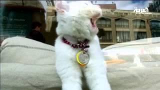 تربية القطط تصيب بالغلوكوما تاني أكبر مسبب للعمى