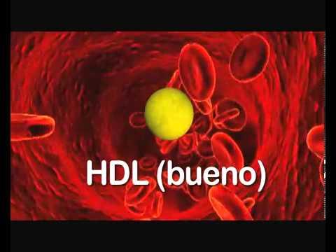 Diferencias entre colesterol bueno y malo   YouTube